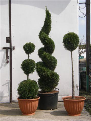 Drzewa i krzewy formowane
